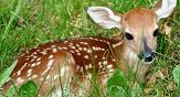 Picture of a deer
